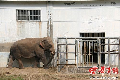 秦岭动物园小动物趴地享受地暖 苦逼人类颤抖吧_陕西
