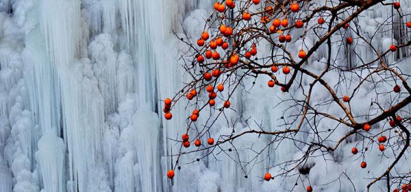 雪地冰天报春来