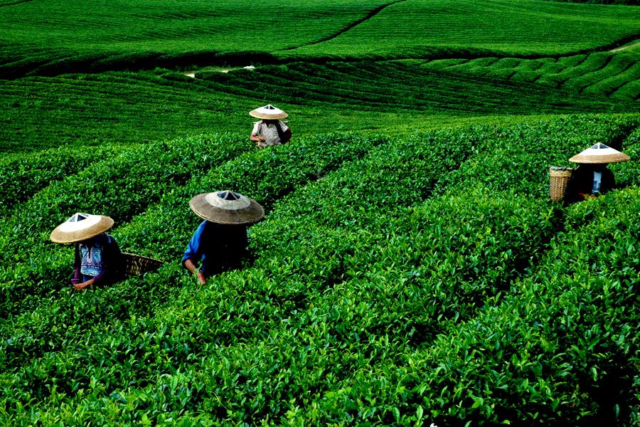 绿色农产品的品牌营销该怎么做?