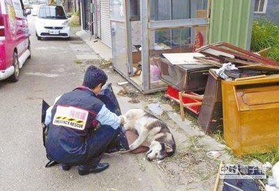 台流浪猫狗送行者5年为500只猫狗收尸诵经(图)