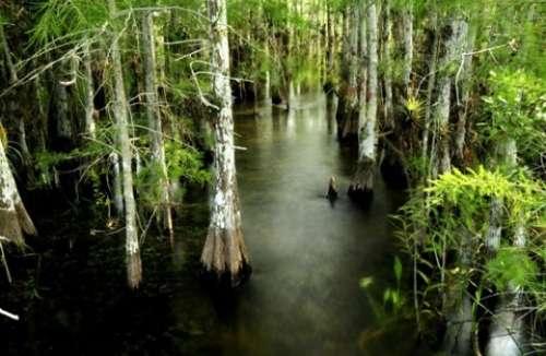 壁纸 风景 森林 桌面 500_326