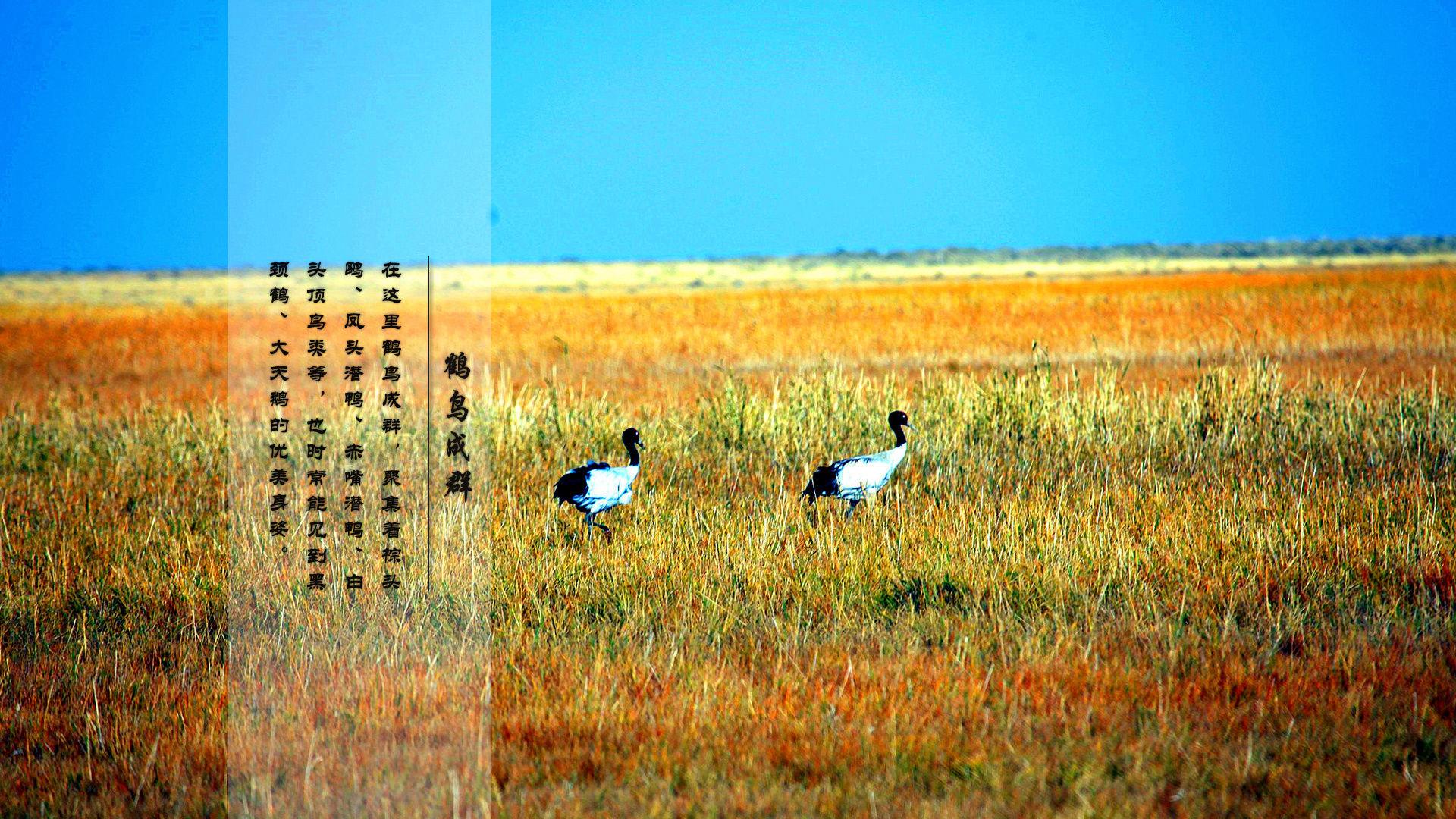 都兰地处柴达木盆地东南隅,自然风光分为昆仑和大漠两大部分,相互