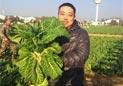 国乒,菜农