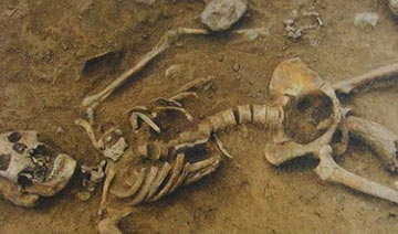 图说千年前惨案:妇女遭性摧残后被牛角捅入下体而死