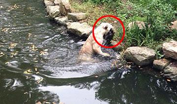 上海:女子逗老虎失手 包被叼走