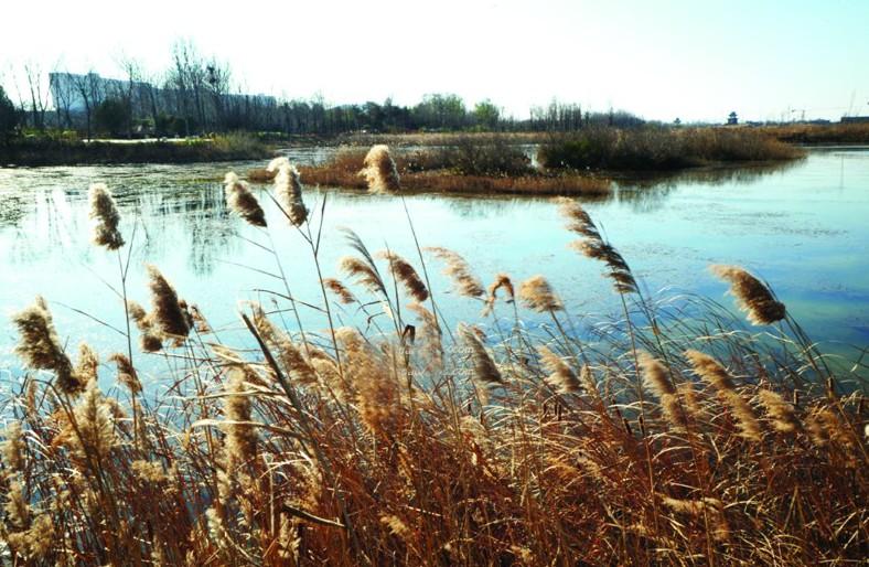 唐岛湾湿地公园获批 为青岛第二处国家级湿地