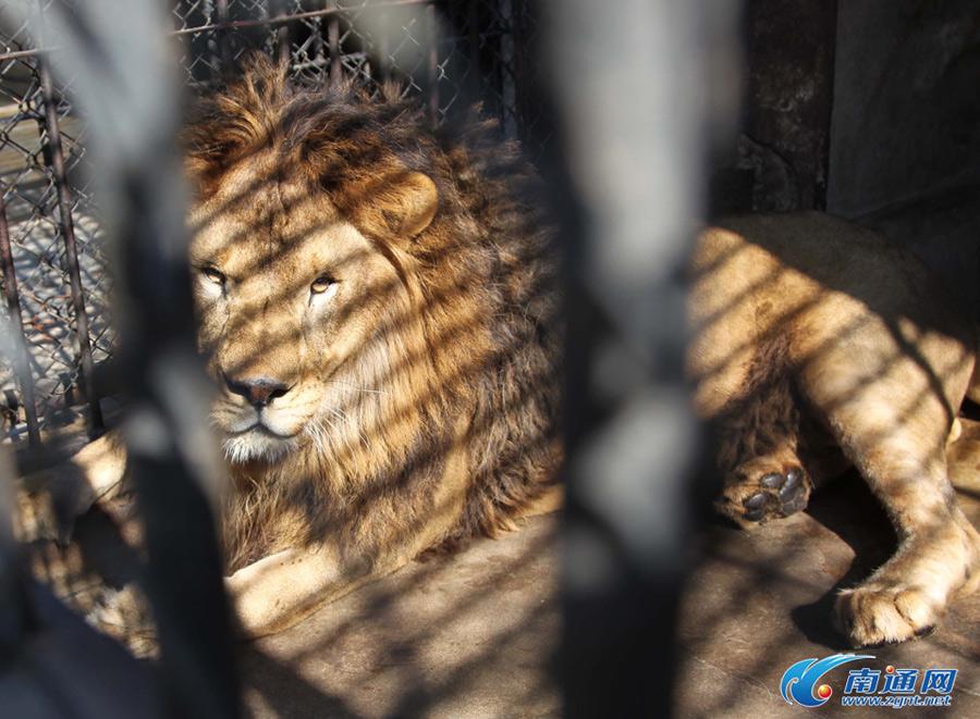 南通文峰公园动物避暑有妙招