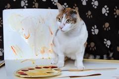 英单耳猫咪被称猫界梵高