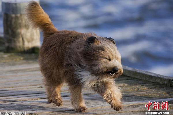 一只小狗在暴风雨中奔跑