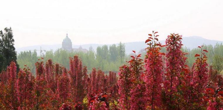 圣母山海棠园