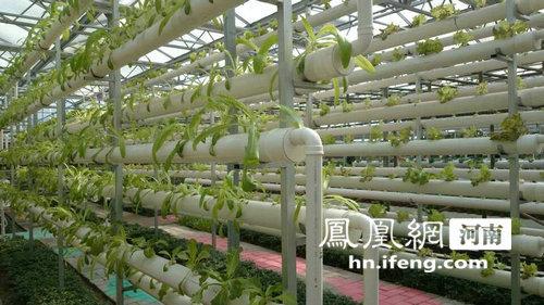 【郑州】首届中牟61国家农业公园嘉年华盛大开幕