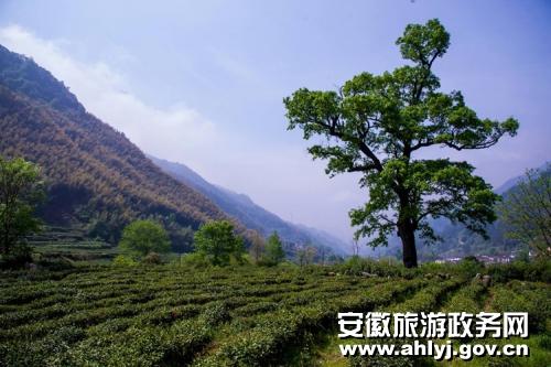 140名摄影家走进池州青阳县陵阳镇 寻访古朴乡村魅力