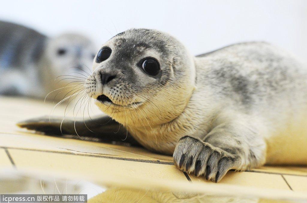 小动物镜头感十足 各种害羞好奇又扮萌