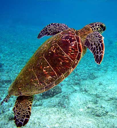 资料图:濒危动物海龟