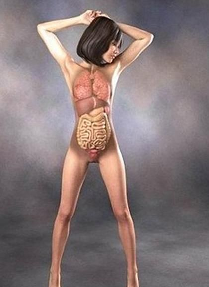 日本3d美女医学人体解剖图 竖