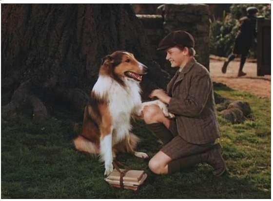 人与动物电影网址_1,最早的真人版宠物电影(1943)——灵犬莱西