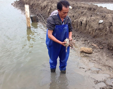 福清20多亩养蟹池疑被投毒 现场捡到农药可乐瓶