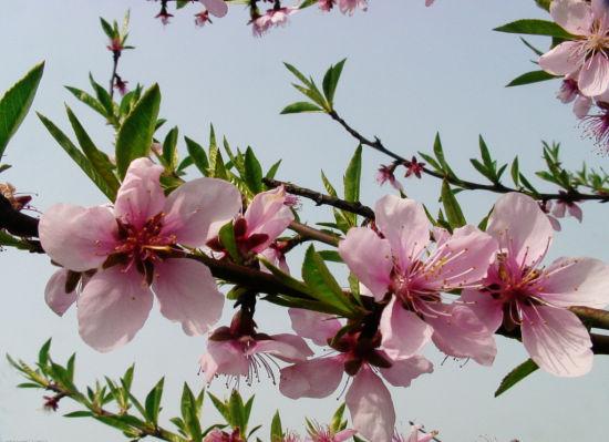 ...有时每种观赏花卉都有其不同的植物属性花朵的开放对于光照...