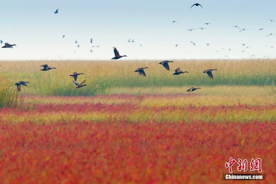 江苏盐城滩涂迎来今年首批越冬候鸟