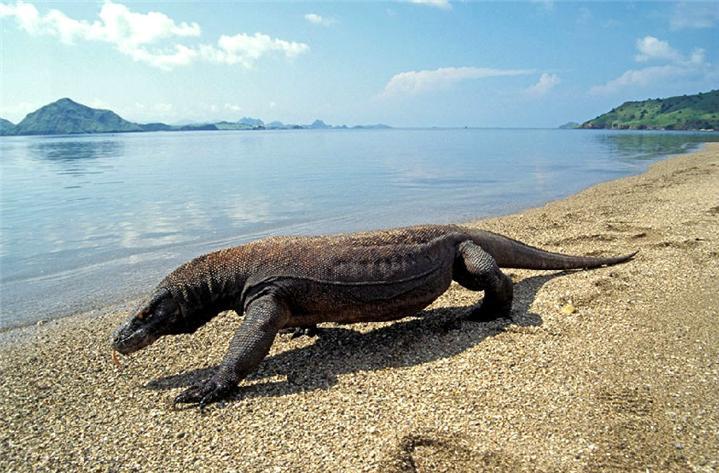 印尼科莫多国家公园