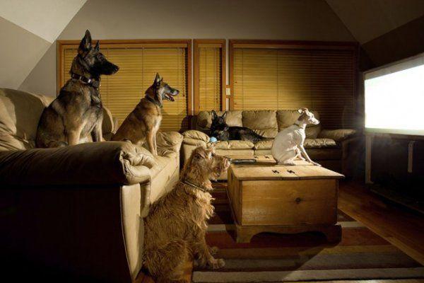 探索频道希望你的狗也看电视