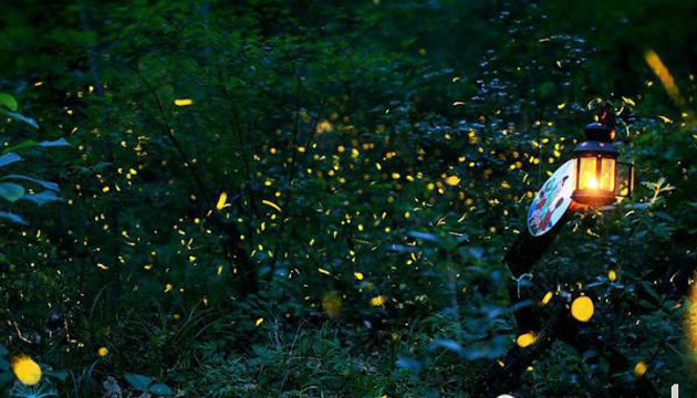 夏季萤火虫