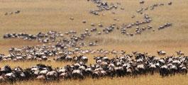 去肯尼亚看野生动物大迁徙