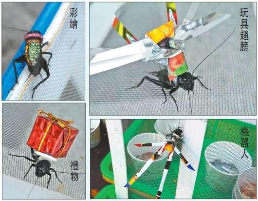 """图片资料 原标题:台南商家在蟋蟀身上粘饰品 被批虐待动物(图) 中新网4月9日电据台湾《联合报》报道,台南市游客聚集的安平老街,最近有商家在蟋蟀身上粘贴机器人、羽毛饰品、玩具翅膀或彩绘,吸引游客,每只卖50元(新台币,下同),逗玩20元。 由于饰品黏上去就不容易拿下来,蟋蟀要一直背到死亡,""""这好像人每天背个大石头在身上"""",动物保护人士批评这样的行为虐待动物,但商家否认。 台南市动物防疫保护处则表示,目前无法可管,只能道德劝说。"""