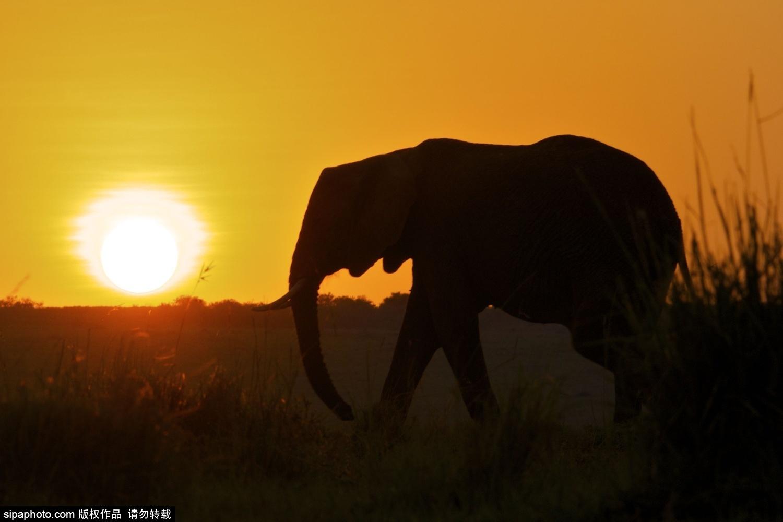 肯尼亚:夕阳下的动物剪影