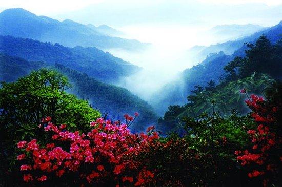 双牌阳明山国家森林公园管理局图片