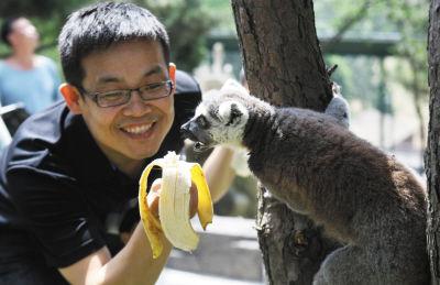 大连森林动物园 猴岛 开园 人与猴子快乐互动