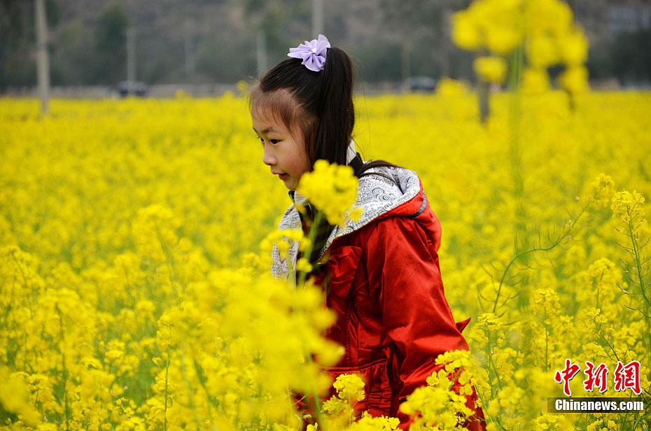 三月春回大地 国内赏花地谁最烂漫