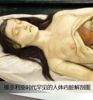 女性人体正面解剖图::真实女性尸体解剖图::女性人体