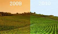 辨析葡萄酒年份