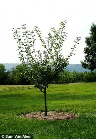 栽种在不同地方的魔力树-一棵树同时结40种不同的水果