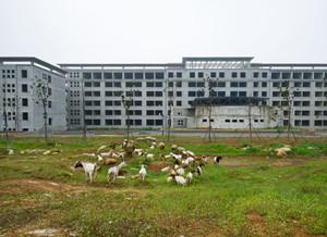 安徽一投资2千万政府办公楼闲置2年 成放羊场