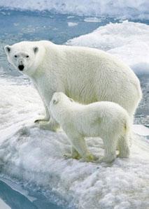 天生杀手之北极熊