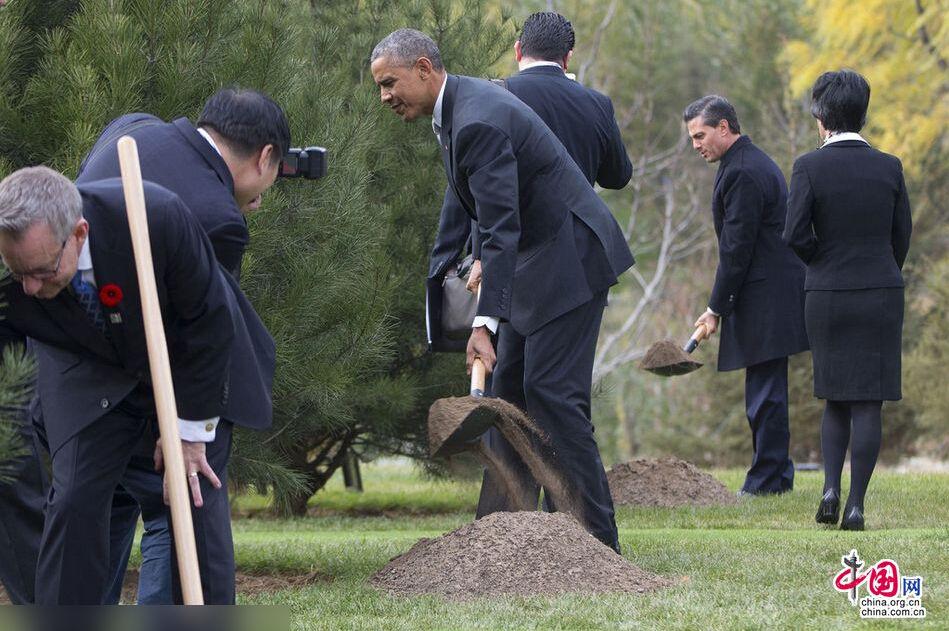 APEC小伙伴植树(1/13) -  东方.旭 - 东方.旭的博客