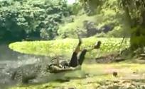 美女背对湖水拍照惨遭巨鳄生吞
