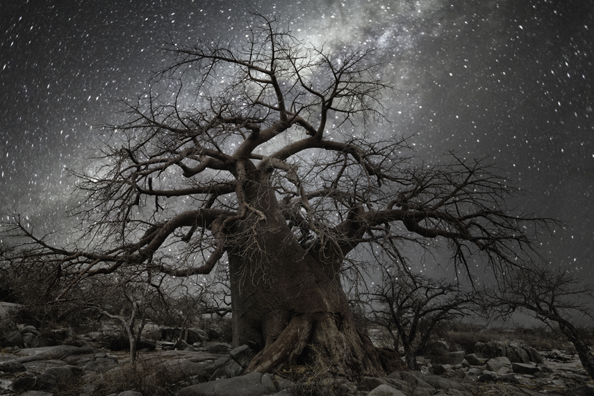 她花了14年找寻世界上最古老的树木(1/41) - 子泳 - 子泳WZ的博客