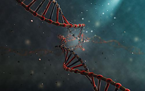 hiv将花束自身的机器病毒挪为己用来v花束分子的遗传物质副本教程细胞公仔图片