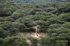他一个人花36年造了一座原始森林