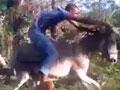 能把毛驴当摩托开的非洲小哥