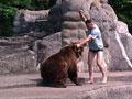 男子闯动物园熊栏被咬 暴打母熊后逃走