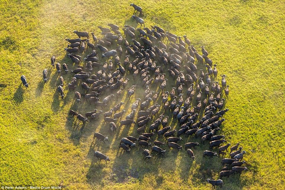 900米高空俯拍的非洲野生动物