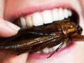 男子耳朵爬进母蟑螂 产下25只小蟑螂