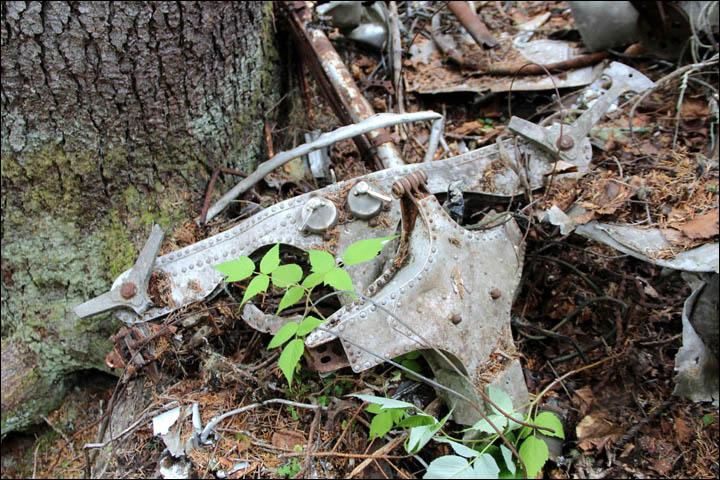 飞机残骸 原标题:苏联失踪飞机80年后被发现 机上200万卢布不知去向(组图) 国际在线专稿 据西伯利亚时报26日报道,近日,俄罗斯哈巴罗夫斯克边疆区最东端的深林里,搜查队找到了80年前失踪的一架飞机残骸以及部分遇难者的尸体,但飞机上的巨额现金不知去向。 1935年6月26日,一架由意大利制造的水上飞机在从俄罗斯萨哈林岛(库页岛)亚历山德罗夫斯克飞往哈巴罗夫斯克的途中失踪。 据悉,飞机上有三名机组人员和九名乘客。乘客中有两名前苏联秘密警察机构内务人民委员部特工,他们负责护送两百万卢布的现金。当时的两百万