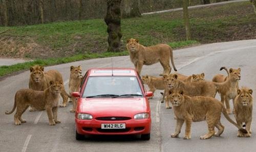 车和动物的图片