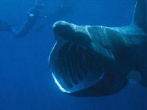 潜水员被鲨鱼咬掉大腿 惊险逃生