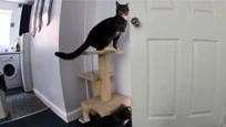 聪明小猫踩架子开门帮狗同伴越狱